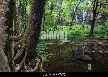 Rainforest landscape and waterfall, Reunion Island - Stock Photo