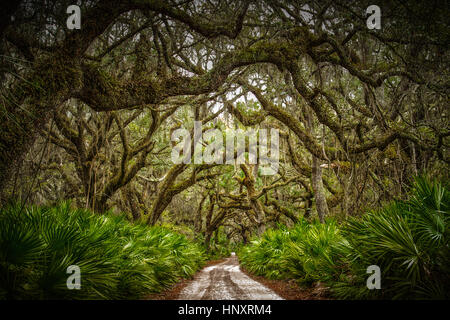 Live Oak lined path on Cumberland Island National Seashore. Located off the coast of Southern Georgia near St. Marys. - Stock Photo