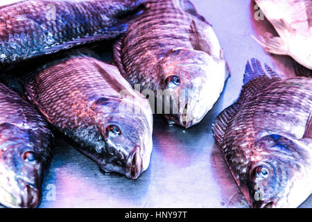 Pile of red snapper whole fish - Stock Photo