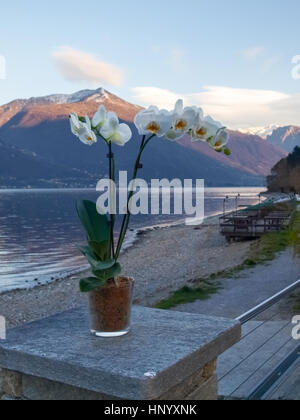 Pianello del Lario, Como - Italy: Orchids in pots and in the background the Lake Como and the mountains - Stock Photo