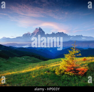 wildflowers in the mountains at sunset. Carpathians. Ukraine, Eu - Stock Photo