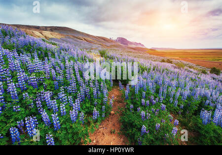 The picturesque landscapes of forests and mountains - Stock Photo