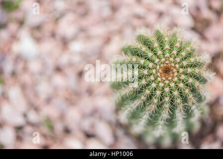 Spanish succulents cactus in February bv macro view - Stock Photo