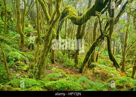 Tourist in the laurel forest, Garajonay National Park, La Gomera, Canary Islands, Spain