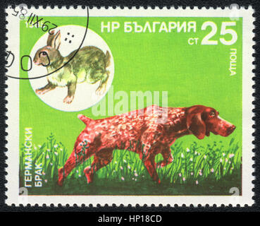 A postage stamp printed in Bulgaria  shows  a German Shorthaired Pointer and  hare,  from series Breeds of hunting - Stock Photo