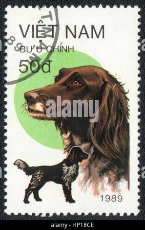 A postage stamp printed in Vietnam shows  a German Shorthaired Pointer,  from series Breeds of hunting dogs,  1989 - Stock Photo