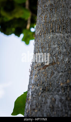 black ants crawling on a tree trunk.