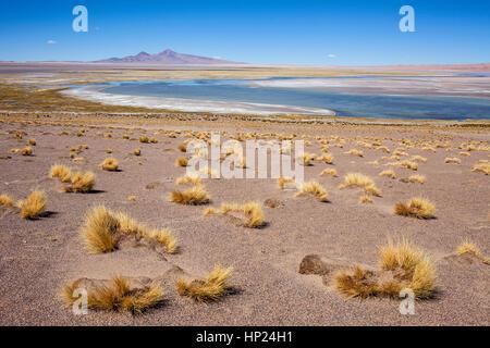 Salar de Tara, salt flats, Altiplano, Puna, Atacama desert. Region de Antofagasta. Chile - Stock Photo