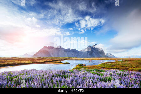 The picturesque landscapes forests and mountains of Iceland - Stock Photo