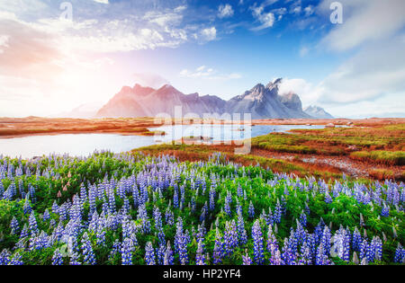 The picturesque landscapes forests and mountains of Iceland. - Stock Photo