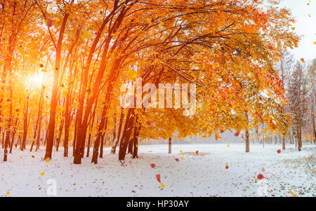 Light breaks through the autumn leaves of trees - Stock Photo