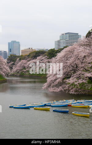 Rowing boats in the Imperial Palace moat in Tokyo, Japan - Stock Photo