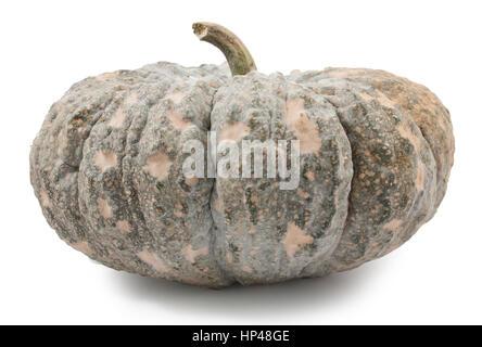 green pumpkin fruit on white background - Stock Photo