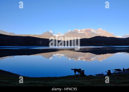 Chandra Taal (Moon Lake) in Indian state Himachalč Pradesh at 4300 m altitude. Dog living there in the wilderness - Stock Photo