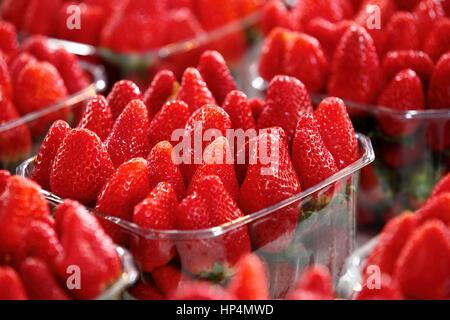 close up fresh israeli strawberries at shop at carmel market, tel aviv, israel - Stock Photo