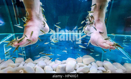 Fish spa pedicure stock photo royalty free image for Fish eating dead skin spa