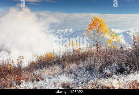 birch forest in sunny afternoon while autumn season. October mou - Stock Photo