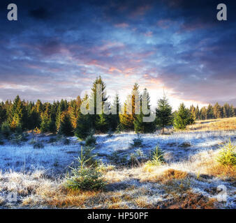magical winter snow covered tree. Sunset in the Carpathians. Ukr - Stock Photo