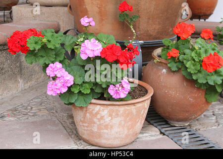 Pink and red geraniums in pots beside gravel and paving path by the stock photo royalty free - Care geraniums flourishing balcony porch ...