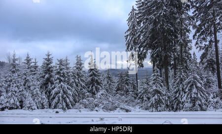 Narrow gauge rail in snowy winter forest of the mountain range Harz in Germany at a cloudy day - Stock Photo