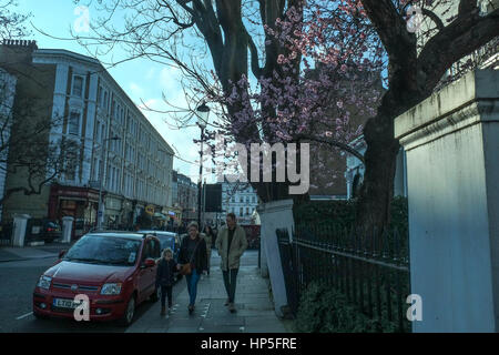 London, UK. 18th February 2017. Unseasonally mild weather in London brings early buds out on Cherry Blossom Tree. - Stock Photo