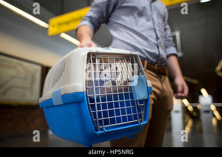 Buenos Aires, Argentina. 18th Feb, 2017. 'Napoleon' reacts inside a kennel next to its owner Nicolas, prior to boarding - Stock Photo