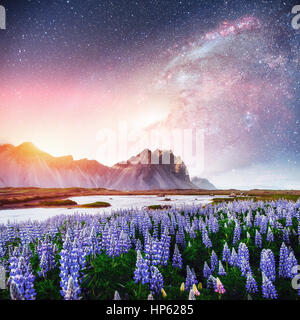The picturesque landscapes of forests and mountains  Iceland.  - Stock Photo