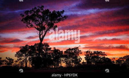 Sunset Tree - Stock Photo
