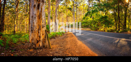 Boranup Forest Panorama, Western Australia - Stock Photo
