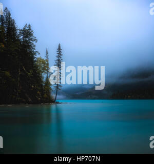 Lone Tree on the banks of Kinney Lake, Mt Robson National Park, British Columbia, Canada - Stock Photo