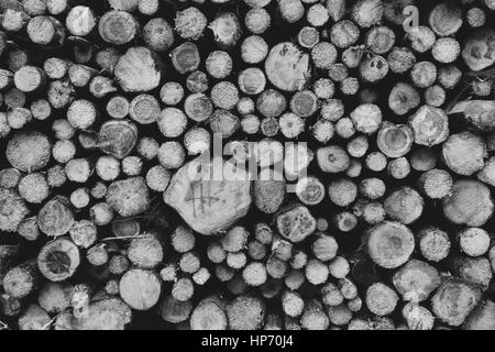 Log pile in black and white - Stock Photo