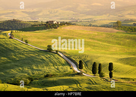 Big cypress trees along the famous white road, or strada bianca, towards Terrapille in Val d'Orcia valley, Tuscany, - Stock Photo