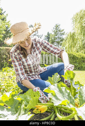 Junge Frau im Garten, erntet Zucchini (model-released) - Stock Photo