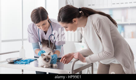 Professional veterinarian working at the veterinary clinic, she is examining a cat on the medical examination table, - Stock Photo
