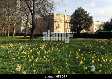 Spring Daffodils, frontage of Lancaster House, Pall Mall, St James, London, England, UK - Stock Photo