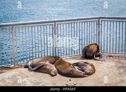 Seals sleeping in the sun in an enclosure at Victoria and Alfred Waterfront in Cape Town, South Africa - Stock Photo
