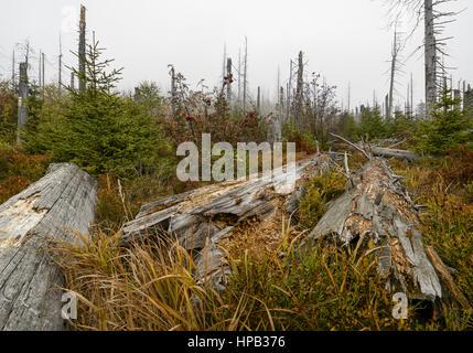 Nationalpark Bayerischer Wald, Deutschland - Stock Photo