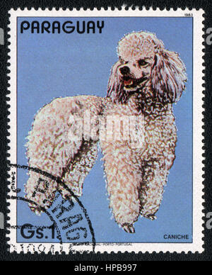 A stamp printed in Paraguay  shows a  Poodle , from series Breed of dogs,  circa 1983 - Stock Photo