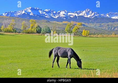 Horse Grazing in Colorado - Stock Photo