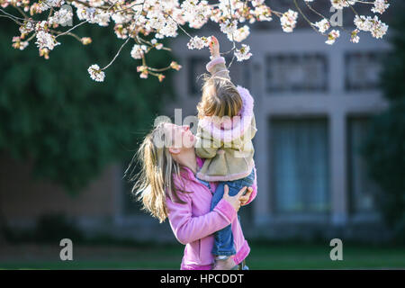 A mother holding her young daughter up to touch cherry flowers - Stock Photo