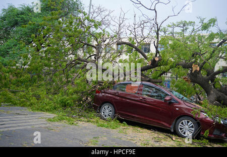 Car destroyed by a fallen tree - Stock Photo