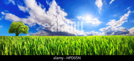 Panoramic landscape: green field with lone tree on the horizon and dynamic clouds in the blue sunny sky - Stock Photo