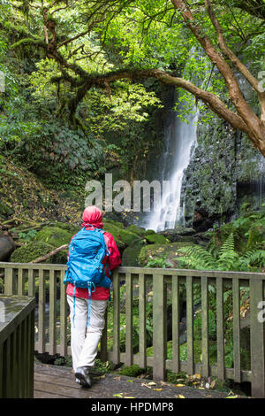 Caberfeidh, Catlins Conservation Area, Otago, New Zealand. Hiker in temperate rainforest admiring the lower cascade of Matai Falls from wooden bridge.