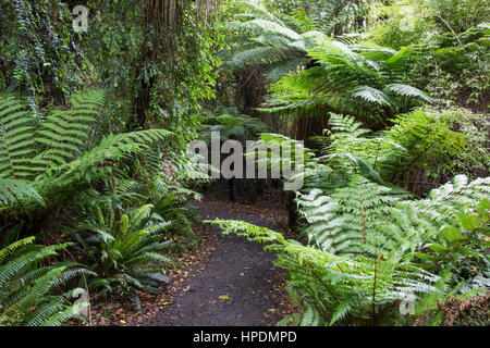 Chaslands, Catlins Conservation Area, Otago, New Zealand. Overgrown rainforest trail leading to Cathedral Caves. - Stock Photo