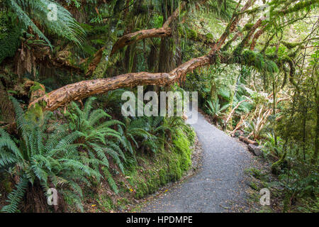 Chaslands, Catlins Conservation Area, Otago, New Zealand. Overgrown rainforest trail leading to McLean Falls. - Stock Photo