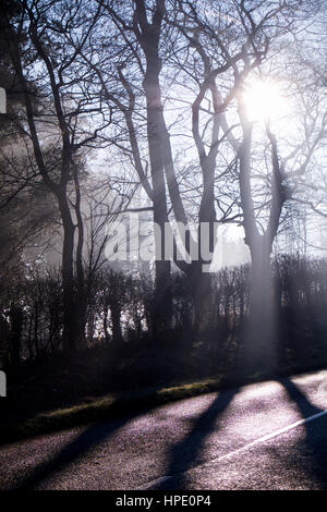 rays of low winter sunlight streaming through trees, shafts of white light, silhoutted trees, hedge and part of - Stock Photo