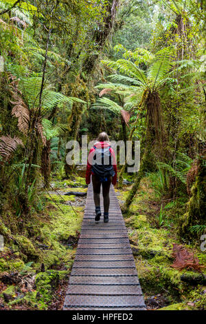 Hiker on walk through rainforest on Lake Matheson, Fox Glacier, West Coast, Southland, New Zealand - Stock Photo