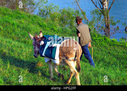 Veneto, Italy. Donkey with a lamb in his saddle bag and shepherd on the riverbank of Brenta river during the transhumance. - Stock Photo