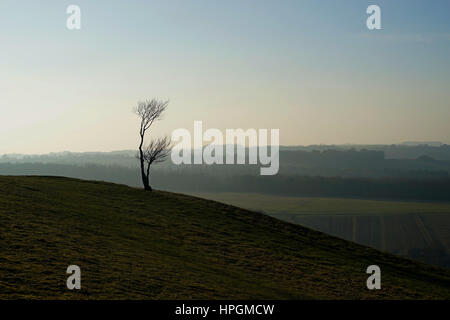 Landscape of a lonely tree on a winter evening - Stock Photo