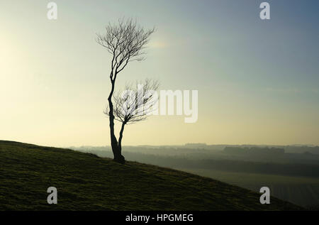 Lonely tree on a winter evening - Stock Photo